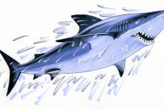 squalo-10